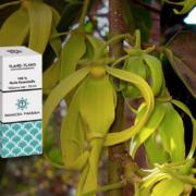 Huile essentielle d'Ylang-Ylang (Cananga odorata)