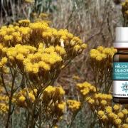 Huile essentielle d'Hélichryse Italienne - Immortelle (Helichrysum italicum)